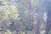 Bakau's Botanical Gardens, Bakau, Gambia
