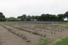 Limburg Lavendel, Hasselt, Belgium