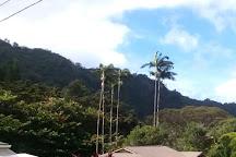 Nuuanu Valley Rain Forest, Honolulu, United States