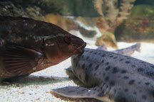 Blue Reef Aquarium, Tynemouth, United Kingdom