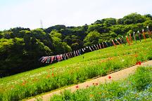 Kurihama Flower Park, Yokosuka, Japan