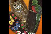 BALAM Art Painted on Feathers, Cozumel, Mexico