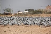 Khichan Bird Sanctuary, Khichan, India