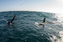 Cabo Shark Dive, Cabo San Lucas, Mexico