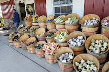 Bedner's Farm Fresh Market, Boynton Beach, United States