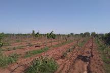 Tularosa Vineyards, Tularosa, United States