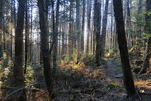 Snakeroot Ecotours, Burnsville, United States