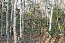 Aokigahara Forest, Fujikawaguchiko-machi, Japan