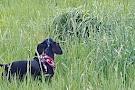 Oxbows Off Leash Dog Park