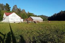 Fern Cottage, Ferndale, United States
