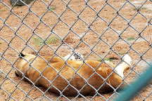 Popcorn Park Zoo, Forked River, United States