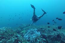 Weligama Bay Dive Center, Weligama, Sri Lanka