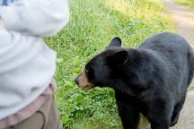 Vince Shute Wildlife Sanctuary, Orr, United States