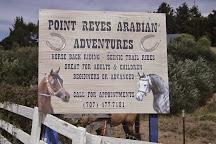 Point Reyes Arabian Adventures, Point Reyes Station, United States