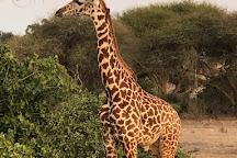 Julius Tact Safaris, Nairobi, Kenya