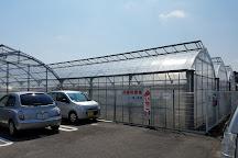 Yokoyama Farm, Kitamoto, Japan