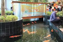 Orchid Garden & Koi Pond, Singapore, Singapore