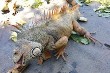 Iguanario Archundia, Manzanillo, Mexico