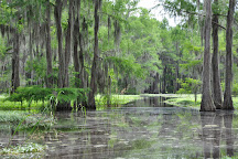 Caddo Outback Backwater Tours, Karnack, United States
