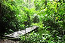 Reserva Bosque Nuboso Santa Elena, Monteverde, Costa Rica