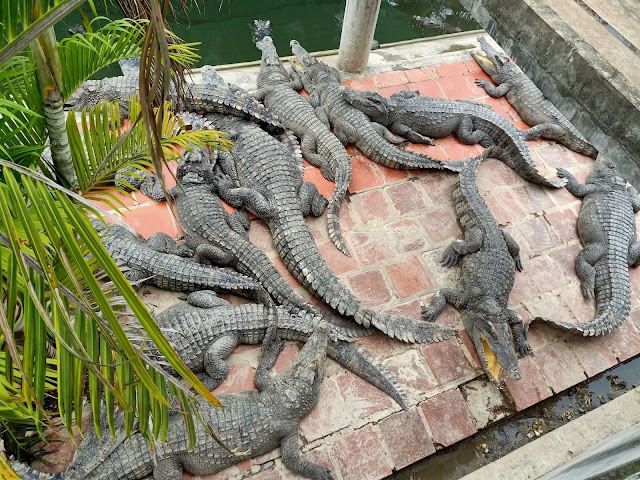 Battambang Crocodile Farm