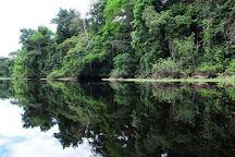 Amazon Green Treasure, Iquitos, Peru