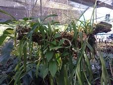 Kaziranga Orchid Park