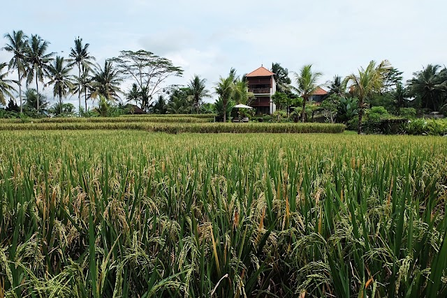 The Suris Ubud