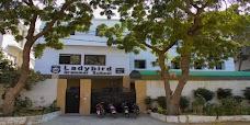 Ladybird Grammar School (Indigo) karachi