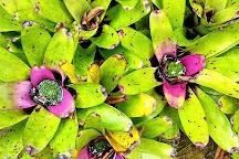 Jardines Secretos, San Gerardo De Rivas, Costa Rica