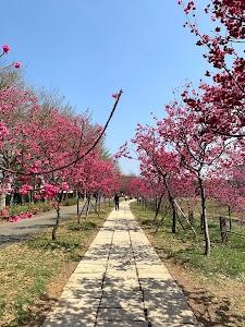 WELE Cherry Blossom Park