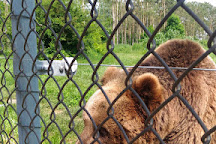 Bear Farm, Veresegyhaz, Hungary