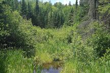 Big Pines Trail, Algonquin Provincial Park, Canada