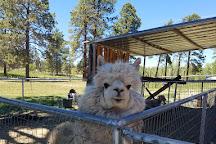 Majestic Dude Ranch, Mancos, United States