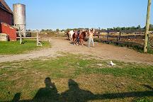 HorsePlay Niagara, Port Colborne, Canada