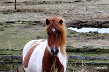 Icelandic Riding, Reykjavik, Iceland