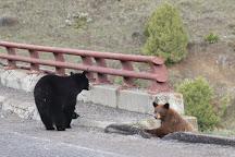 Yellowstone River Picnic Area, Yellowstone National Park, United States