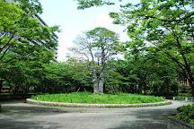Ojima Komatsugawa Park, Koto, Japan