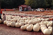 Burt's Farm, Dawsonville, United States