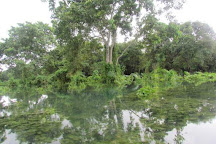 Ratargul Swamp Forest, Sylhet City, Bangladesh