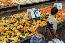 Carpinitos Pumpkin Patch, Kent, United States
