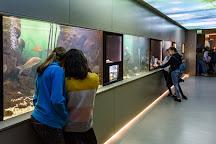 Bodorka Balaton Aquarium, Balatonfured, Hungary