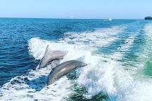 Coastline Dolphin & Snorkeling Excursions, Bradenton, United States