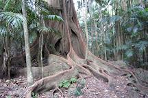 Witches Falls Walking Trail, Tamborine Mountain, Australia