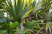 Ile aux Aigrettes Nature Reserve, Mauritius