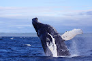 Mariner Cruises Whale and Seabird Tours