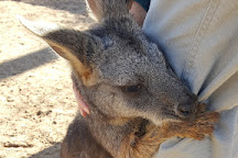 Roos-N-More Zoo, Moapa, United States