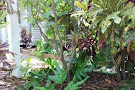 Audubon House & Tropical Gardens