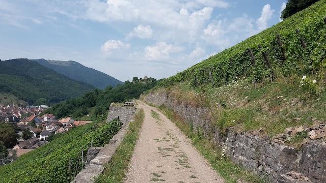 Sentier Viticole de Thann