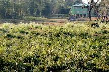 Jaldapara National Park, West Bengal, India